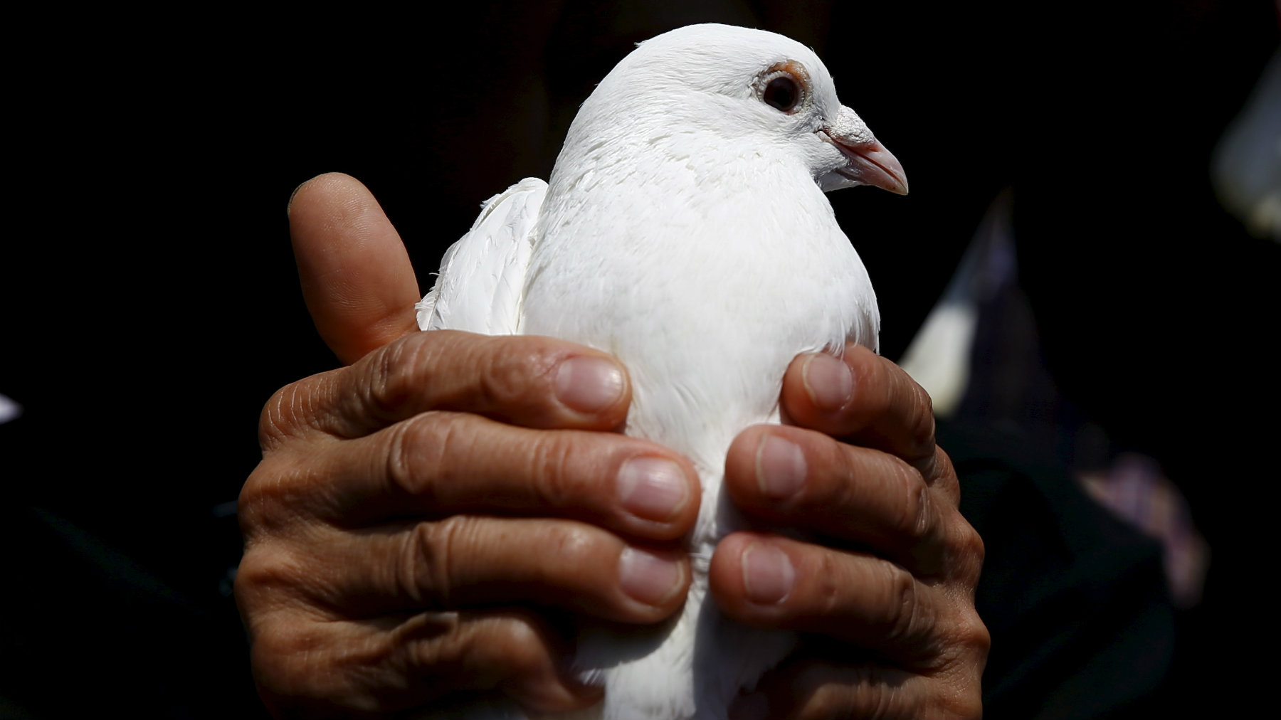 A woman holds a dove as a symbol of peace at Yasukuni Shrine in Tokyo on the anniversary of Japan's surrender in World War Two.