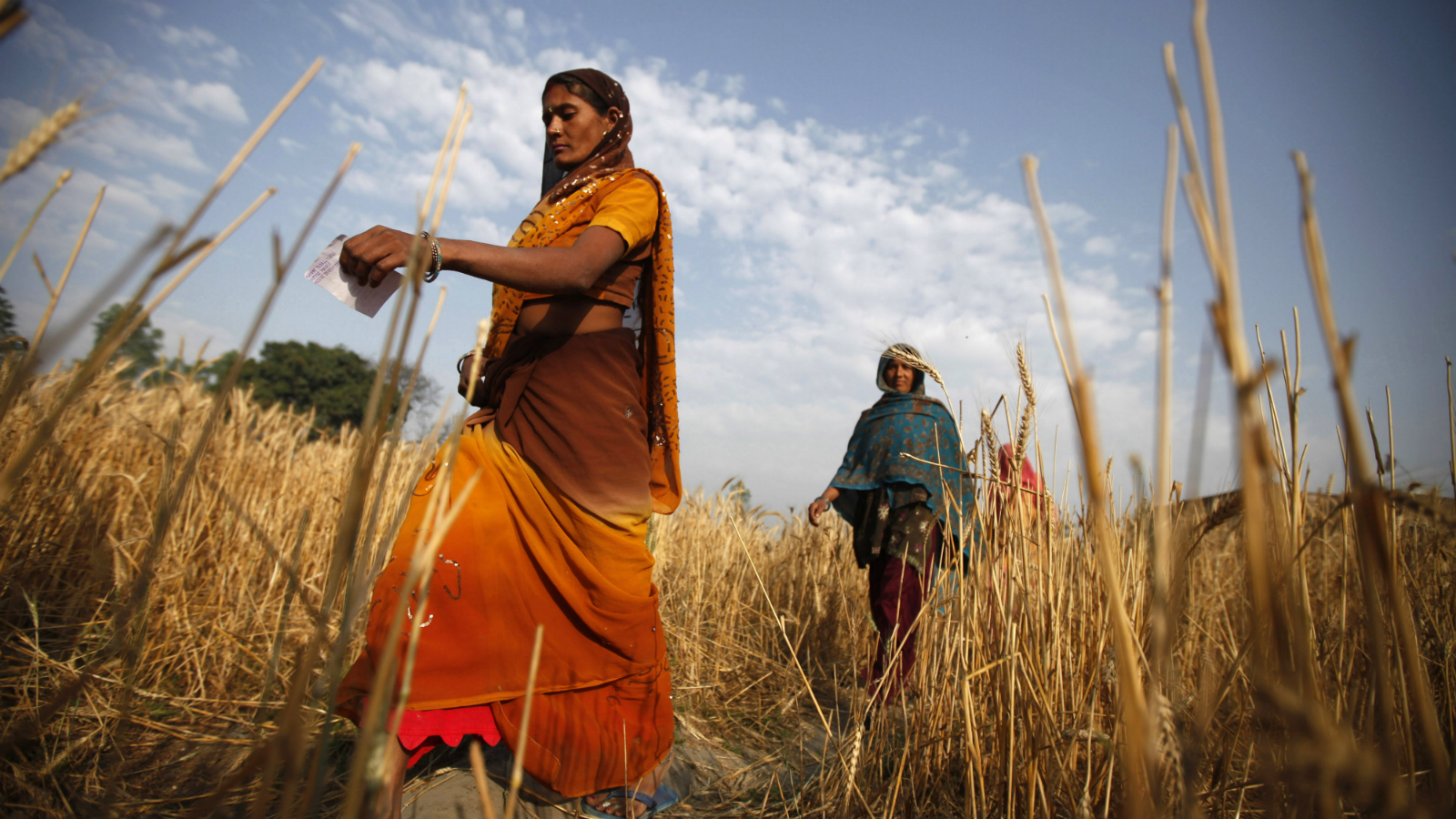 In this April 17, 2014 file photo, Indian village women walk through a rice field towards a polling station to cast their votes in Shahbazpur Dor village in Amroha, in the northern Indian state of Uttar Pradesh. As India faces certain water scarcity and ecological decline, the country's main political parties campaigning for elections have all but ignored environmental issues seen as crucial to India's vast rural majority, policy analysts say.