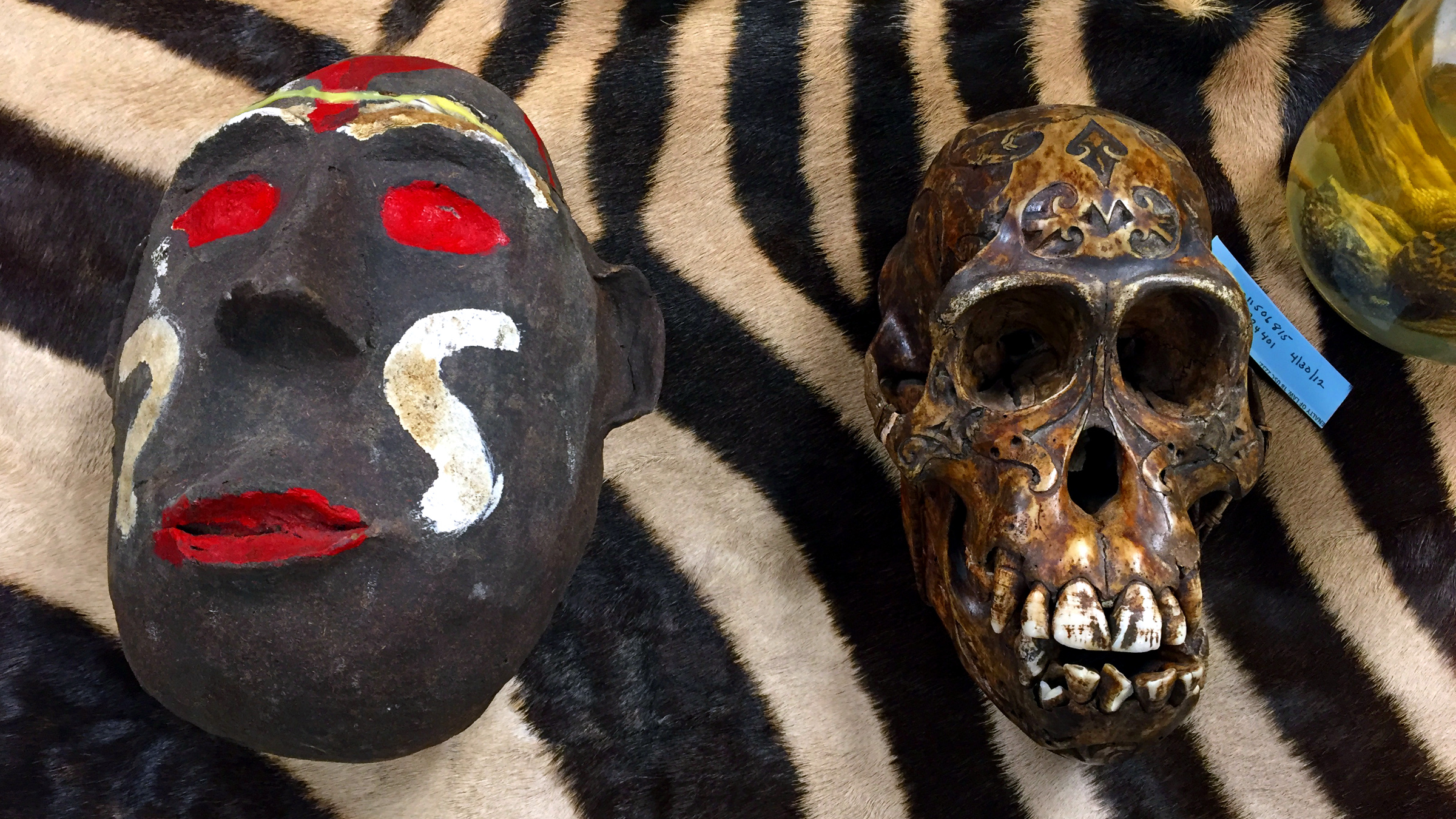 A carved Chimpanzee skull and the ceramic mask that hid it.