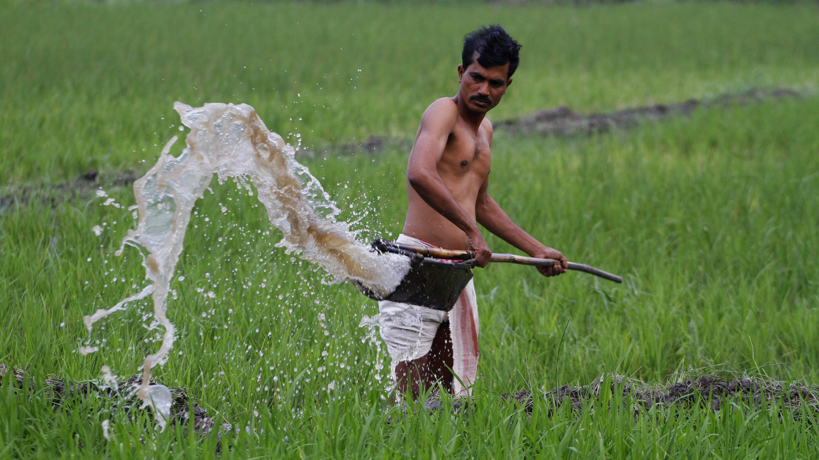 An Indian farmer waters his paddy field in Pobitora village, about 55 kilometers east of Gauhati, India, Wednesday, Feb. 29, 2012. India's economy grew at its slowest pace in over two years in the December quarter, adding to pressure on the central bank to lower interest rates even as inflation remains high. Agriculture grew 2.7 percent in the October-December quarter from a year earlier. (AP Photo/Anupam Nath)