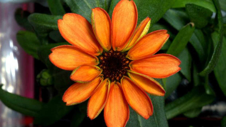 flower-space