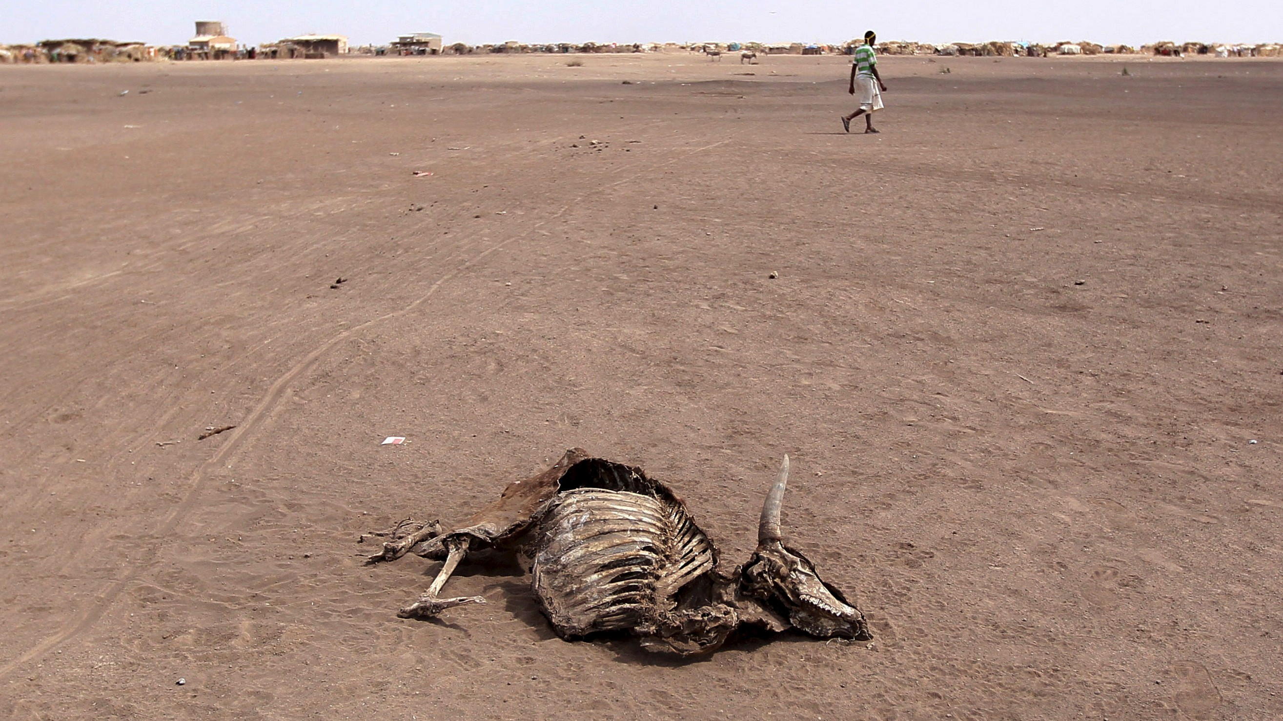 A man walks near a carcass of a dead cow in Farado Kebele, one of drought stricken Somali region in Ethiopia, January 26, 2016. The drought relief effort in Ethiopia needs about $500 million to fund programmes beyond the end of April to support 10.2 million people facing critical food shortages this year, the U.N. World Food Programme said on Thursday. Picture taken January 26, 2016. REUTERS/Tiksa Negeri - RTX24DMG