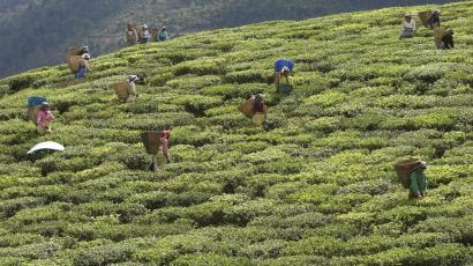 Sikkim-India-Organic state-Narendra Modi-Organic Farming-Farming