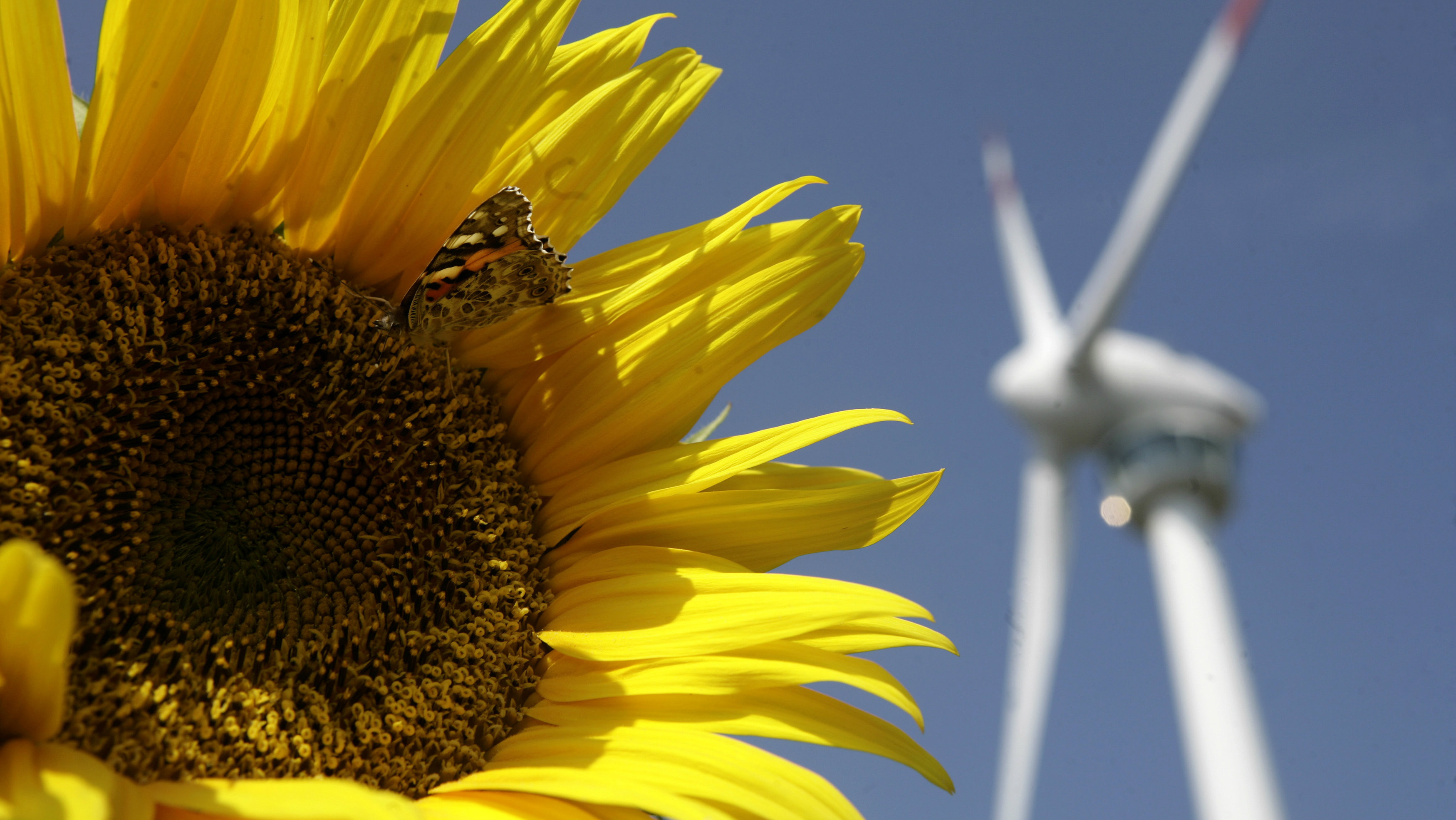 A butterfly sits on a sunflower in front of a wind generator in Bruck and der Leitha, some 40km (some 25 miles) east of Vienna September 23, 2009. REUTERS/Herwig Prammer (AUSTRIA ENERGY ENVIRONMENT)