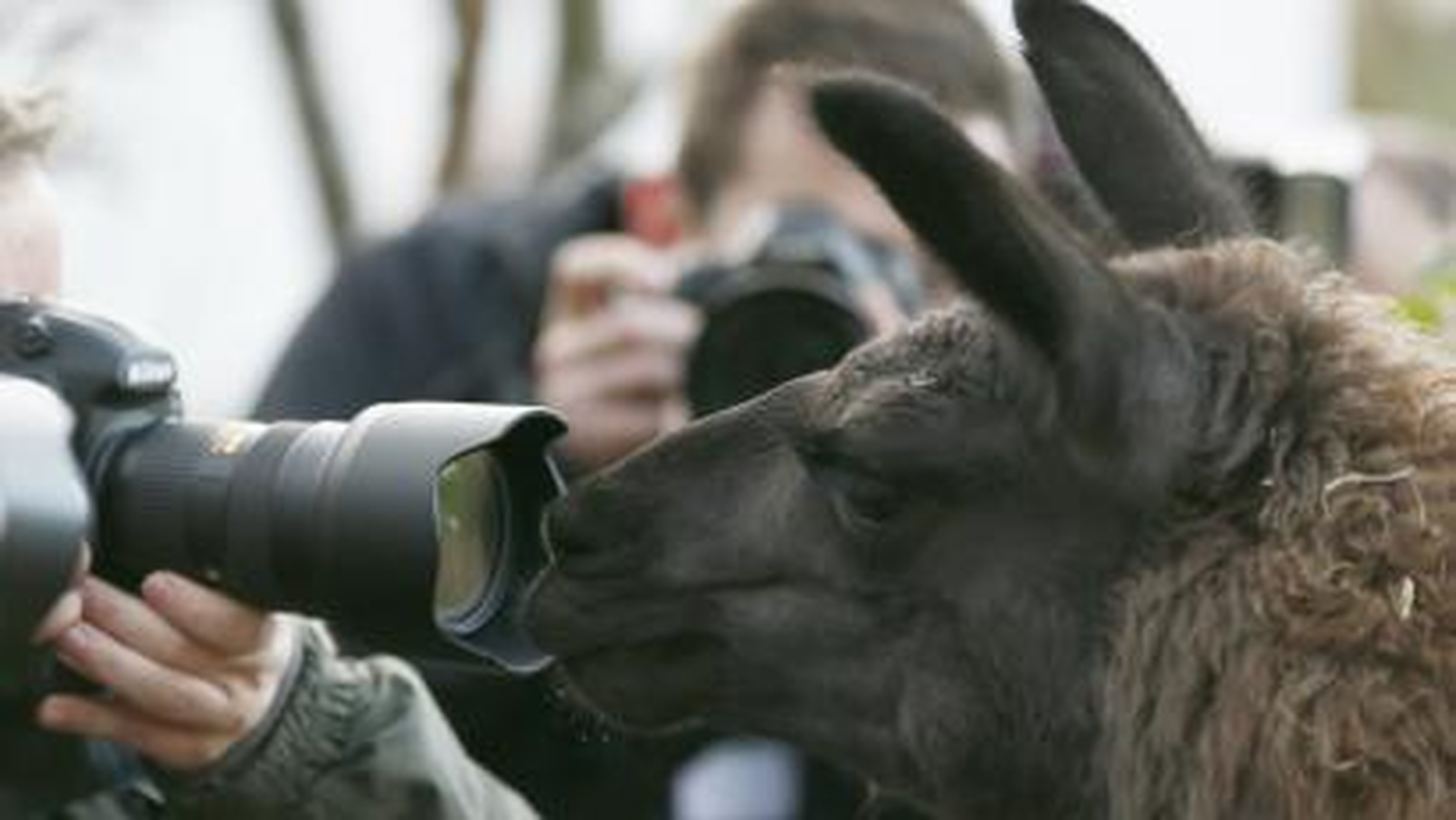 llama and camera