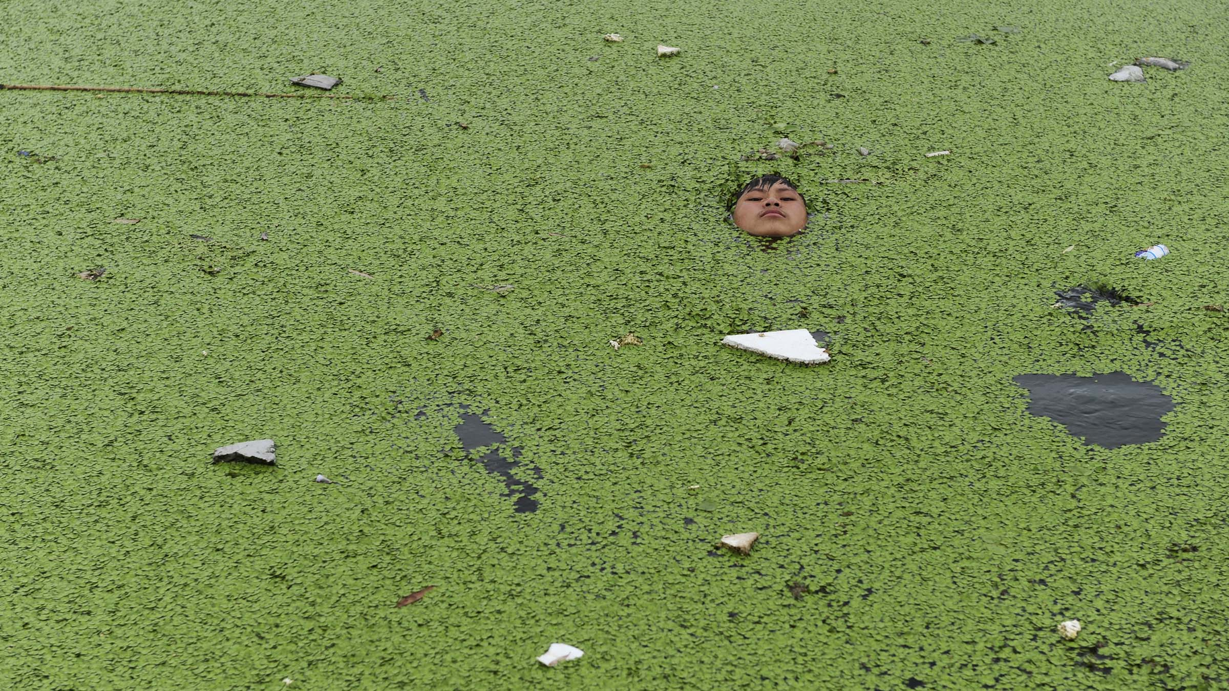 A boy floats on a river covered by duckweed to cool off during a hot summer day in Jiaxing
