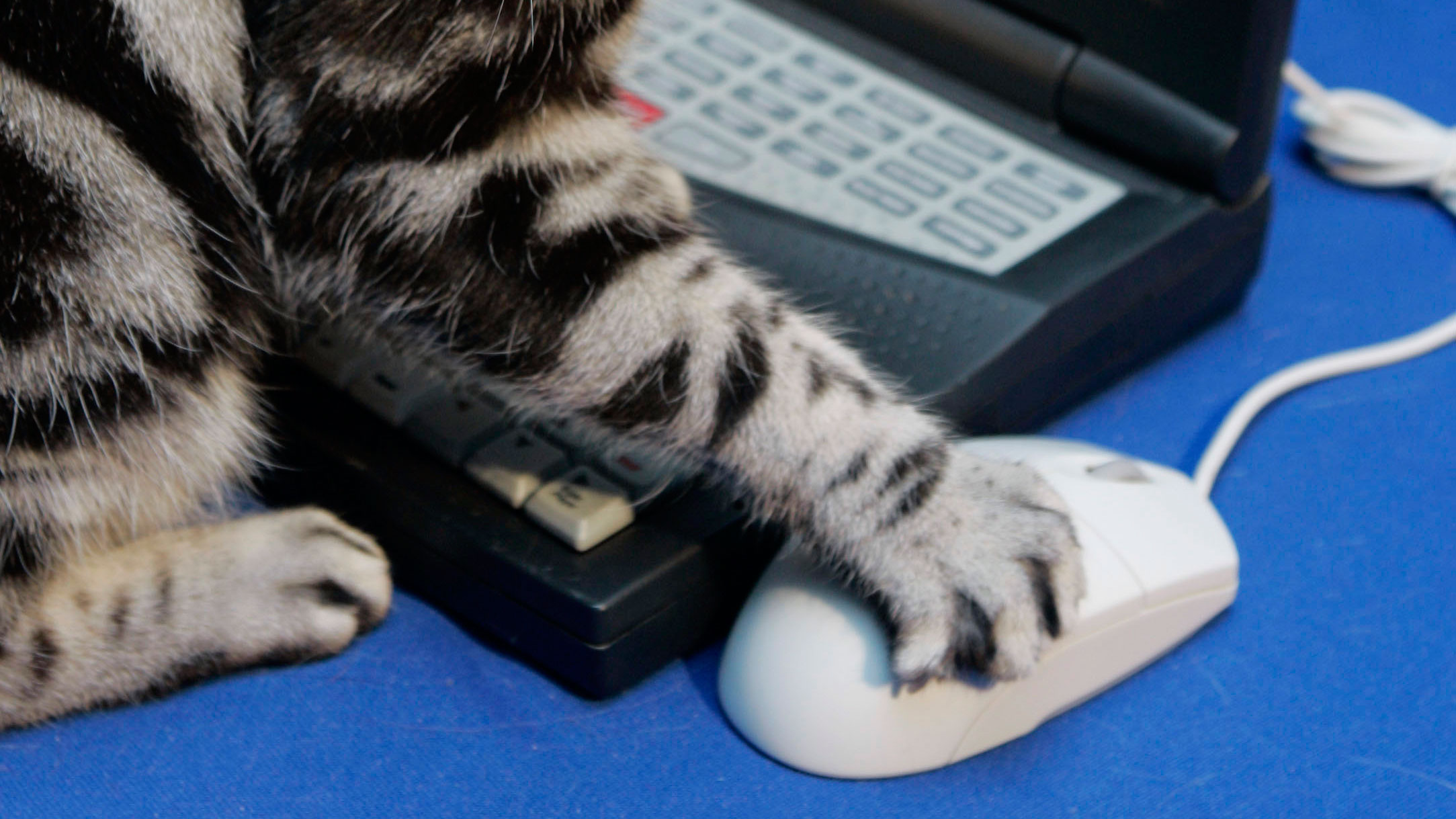 cat-computer-mouse