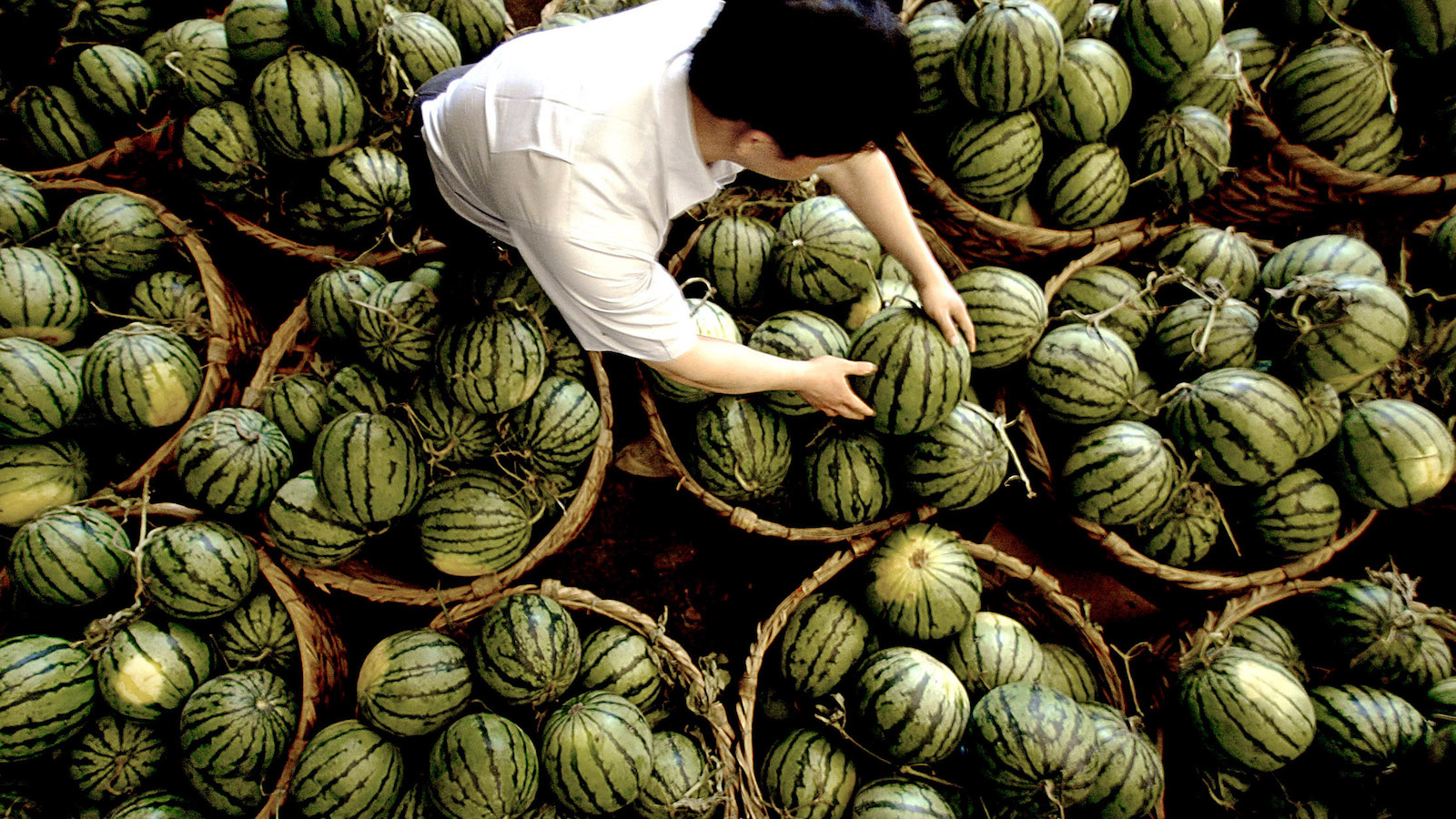 A Chinese fruit wholesaler arranges watermelons in his stall at a market in Shanghai municipality May 13, 2005. The Chinese mainland has decided to increase the admittance of Taiwan fruits from 12 species to 18 species and offer zero tariff on more than 10 species of the fruits, according to Chen Yunlin, director of the Taiwan Work Office of CPC Central Committee and the Taiwan Affairs Office of the State Council. Picture taken on May 13, 2005. NO RIGHTS CLEARANCES OR PERMISSIONS ARE REQUIRED FOR THIS IMAGE. CHINA OUT REUTERS/China Newsphoto PP05050211  SUN/CN - RTRB47P