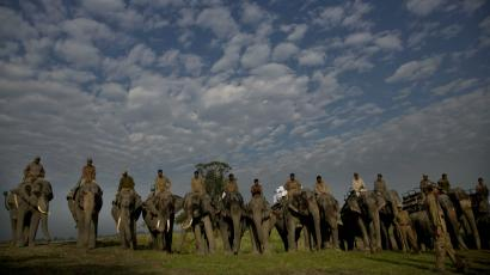 India-Elephants