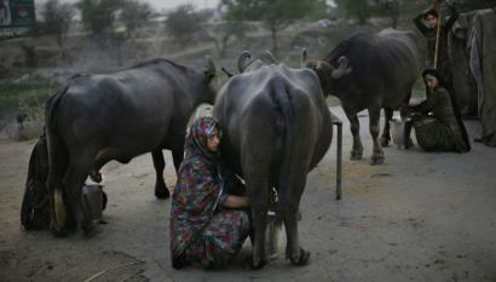 india-jobs-milker-teamlease