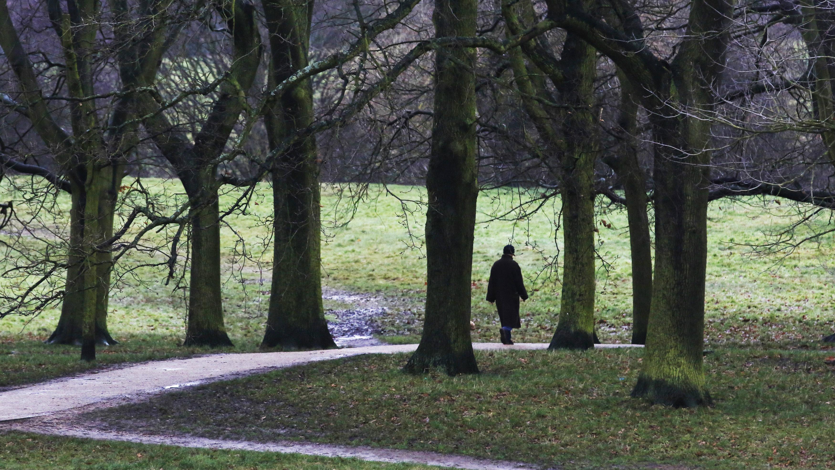 A man takes a winter walk on Hampstead Heath in London.