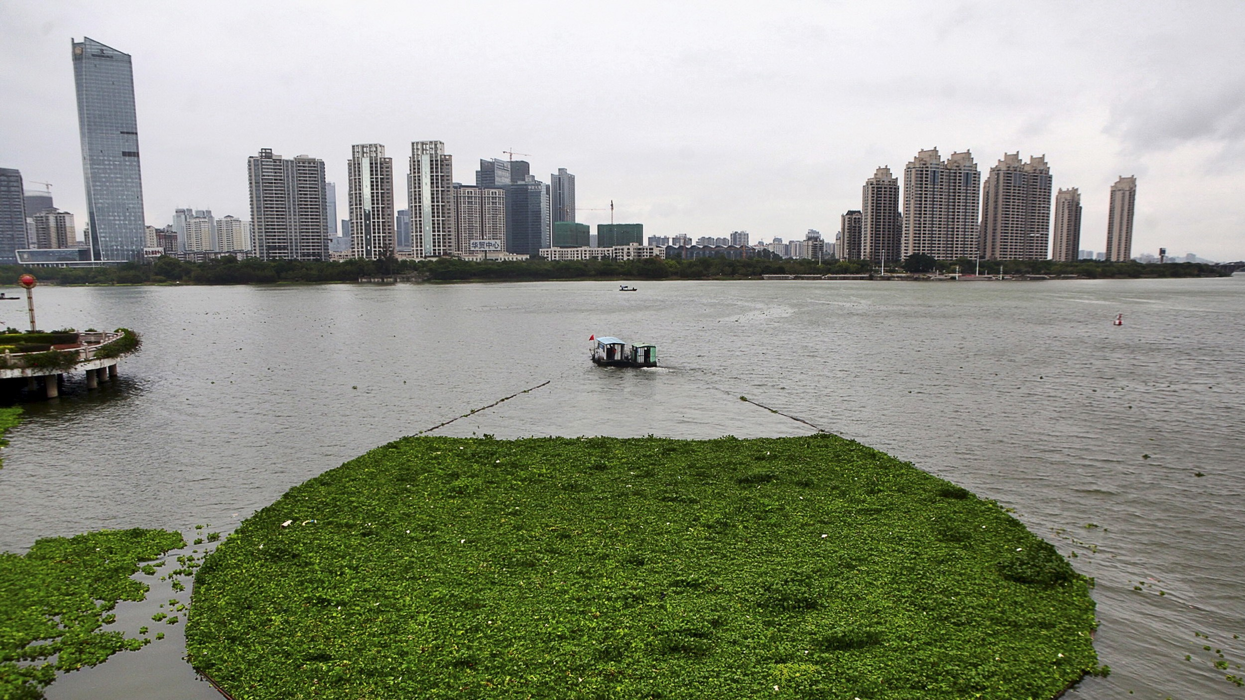 A boat pulls away water lettuce as it cleans up the surface of Xizhi River, in Huizhou, Guangdong province April 8, 2015. Picture taken April 8, 2015. REUTERS/Stringer  CHINA OUT. NO COMMERCIAL OR EDITORIAL SALES IN CHINA       TPX IMAGES OF THE DAY      - RTR4WR19
