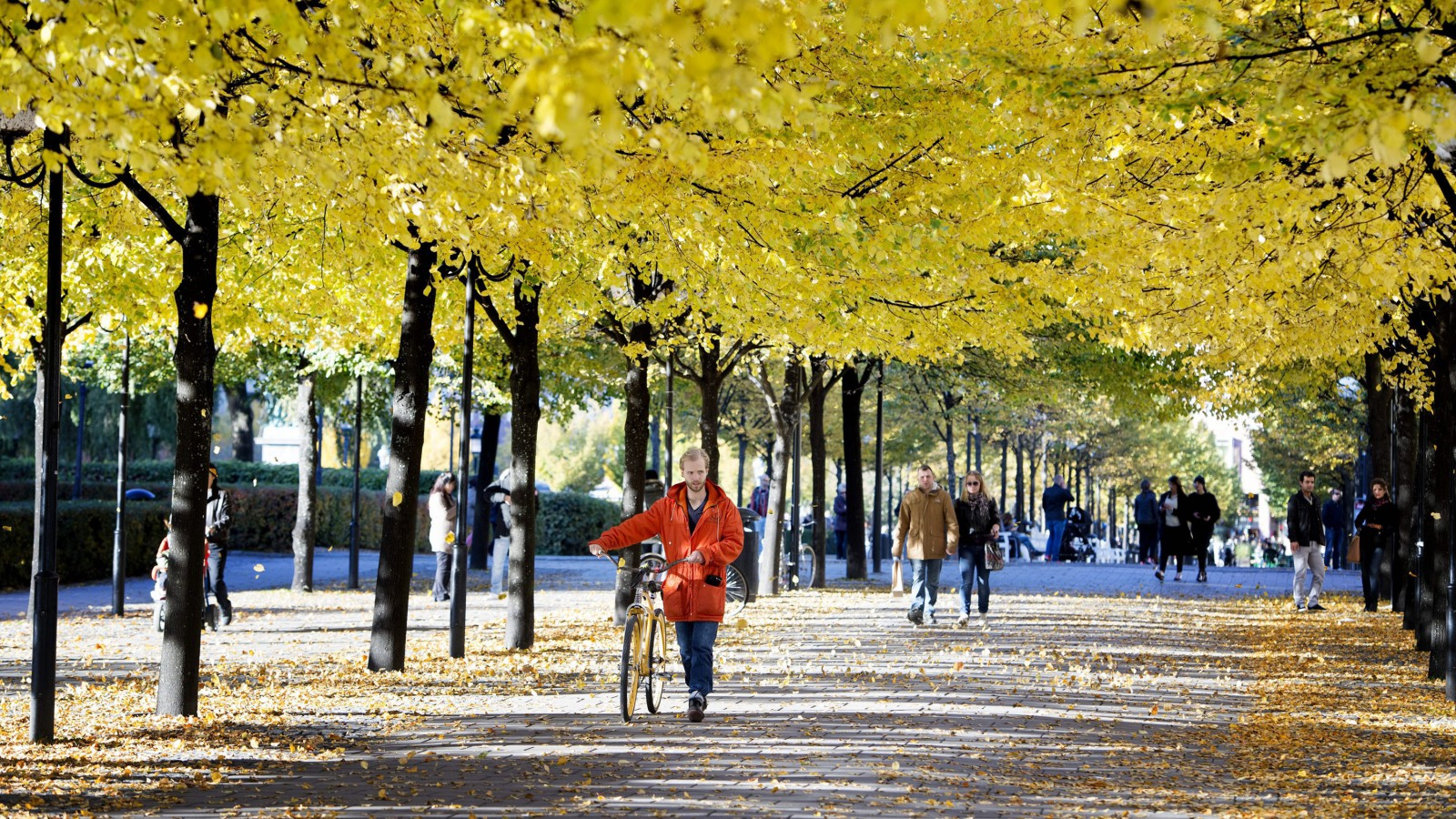 A man pushes his bicycle on a sunny autumn day.