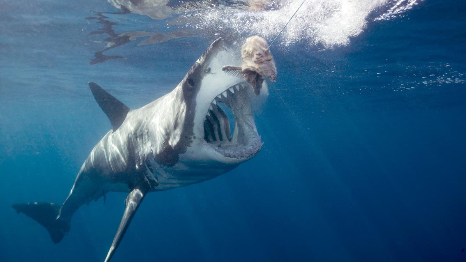"""Shark Tank"""" is a great deal for entrepreneurs, and other myths about ..."""