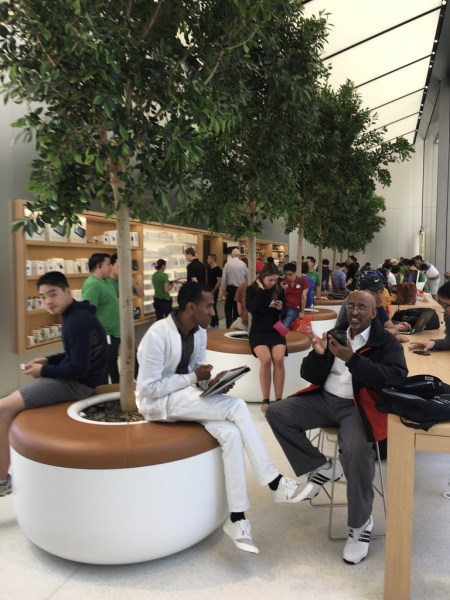 apple store plant seating