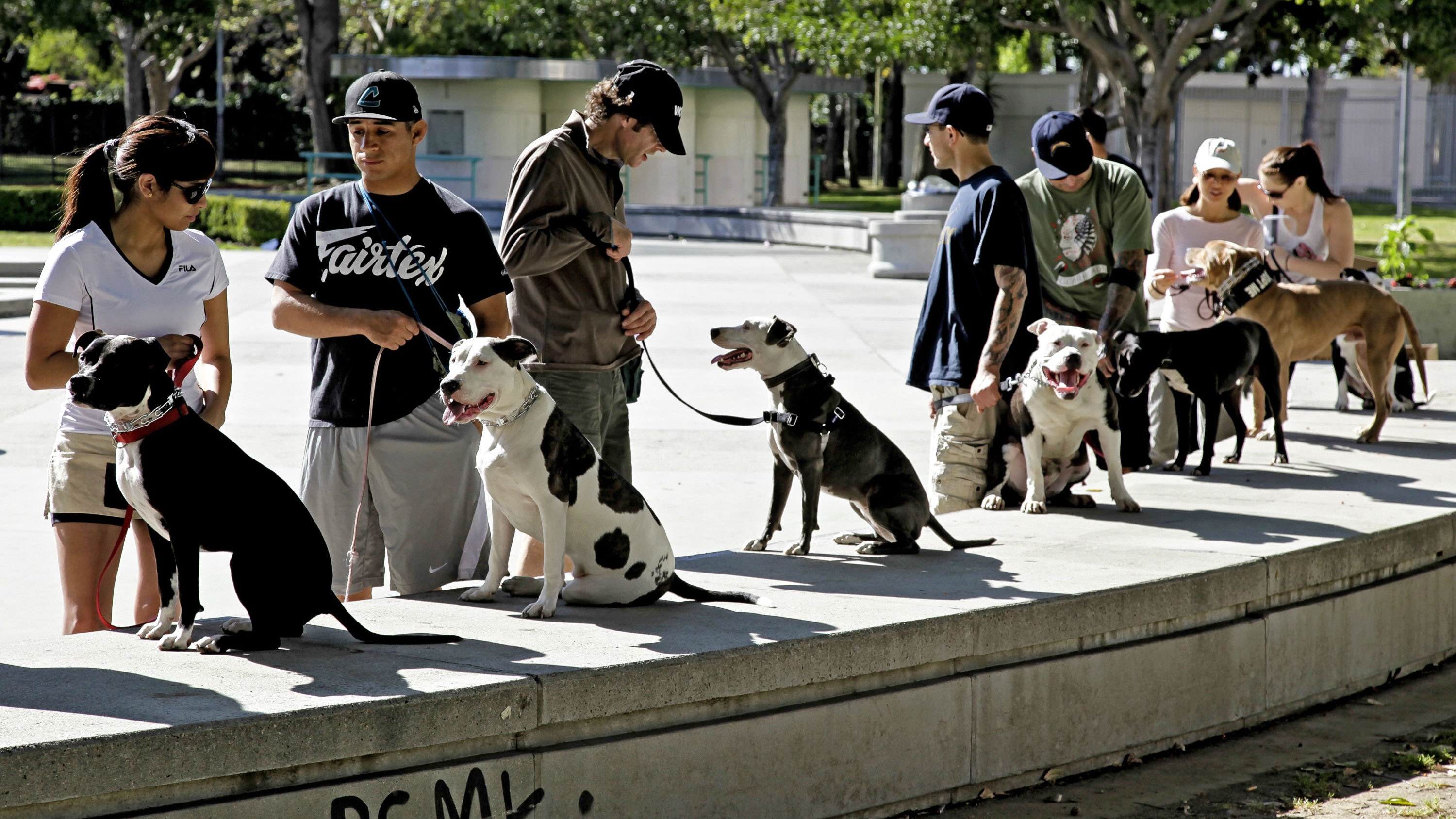 """In this Sunday, March 3, 2012 photo, students prepare for a training and obedience class for pit bulls led by Cornelius """"Dog Man"""" Austin, not pictured, at the Coliseum in downtown Los Angeles"""