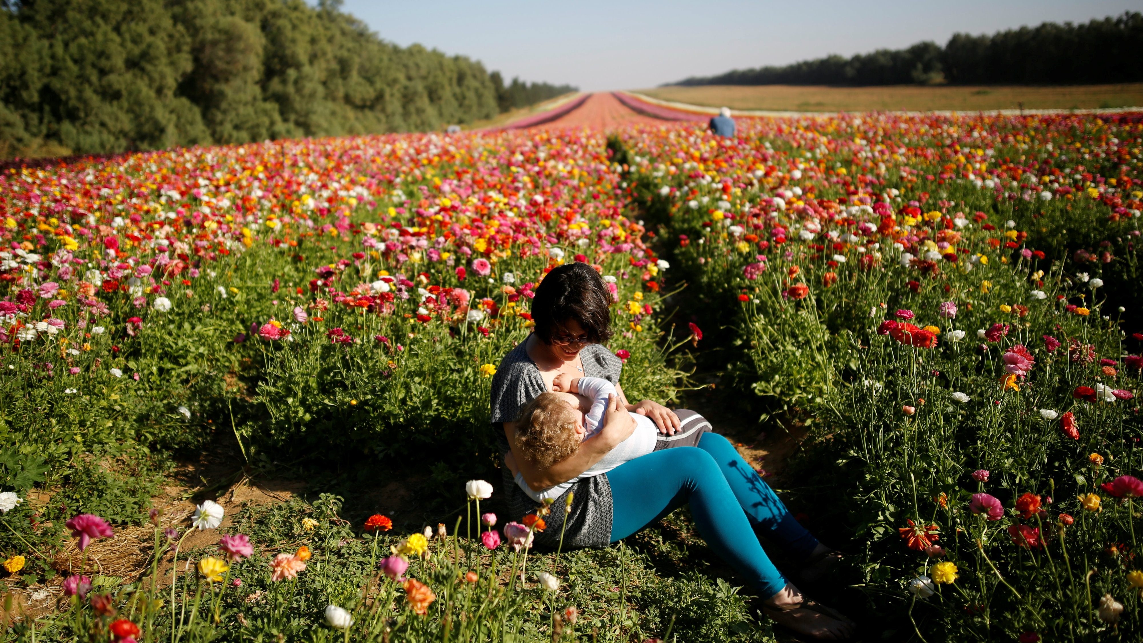 An Israeli woman breastfeeds her baby in a buttercup field near Kibbutz Nir Yitzhak in southern Israel