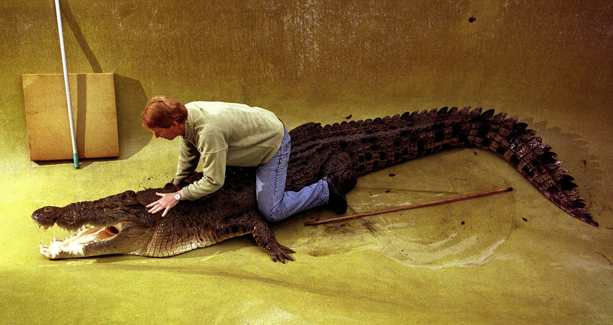 Owner of Australia's oldest and largest reptile park, John Weigel, holds a 5-metre (16 feet) long sa..