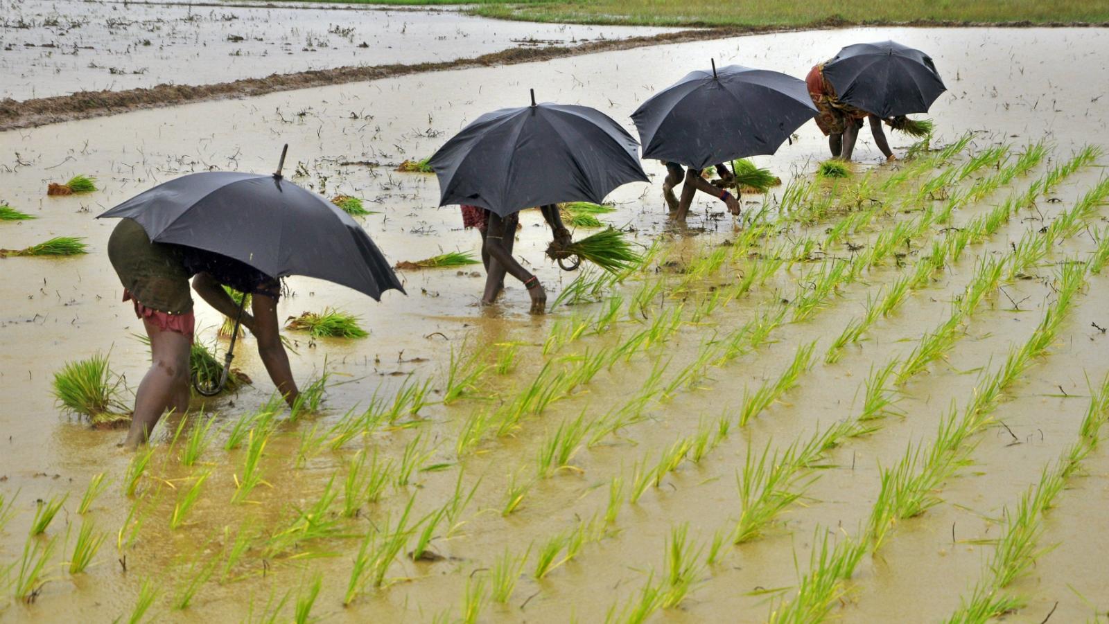 India-Monsoon-Kerala-Narendra Modi-economy-business