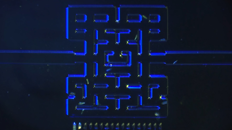 Scientists have created a real life microscopic Pac-Man maze — Quartz