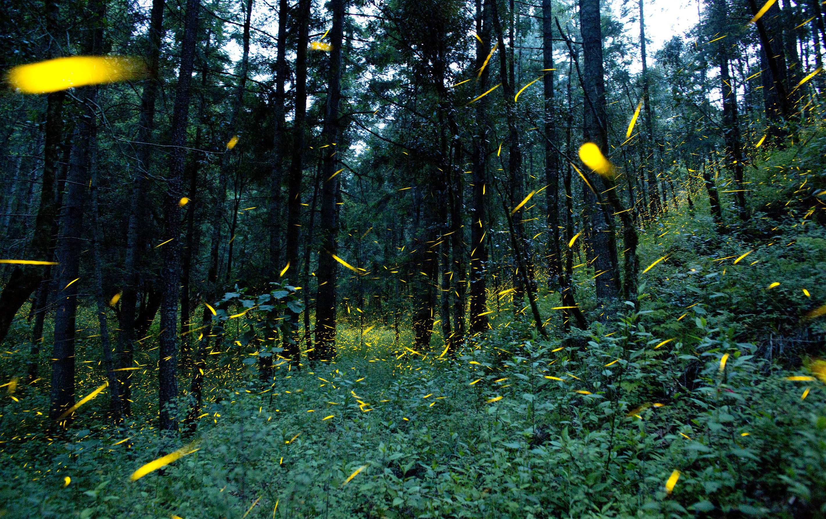 Photos: Farmers in Mexico are giving firefly tours to