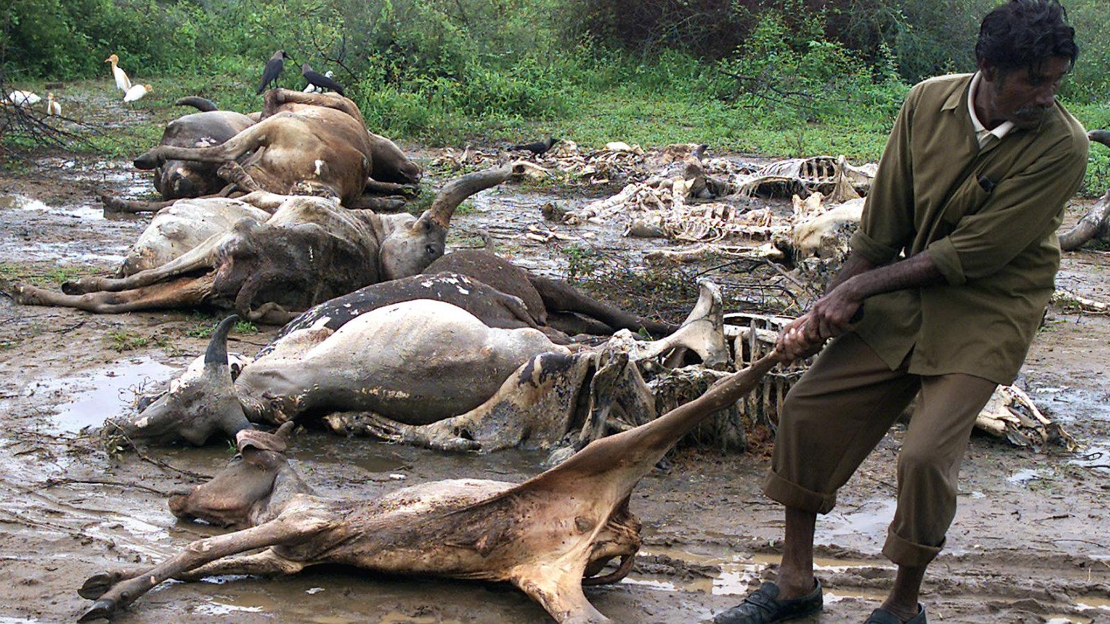 India-Gujarat-Cow-Dalits