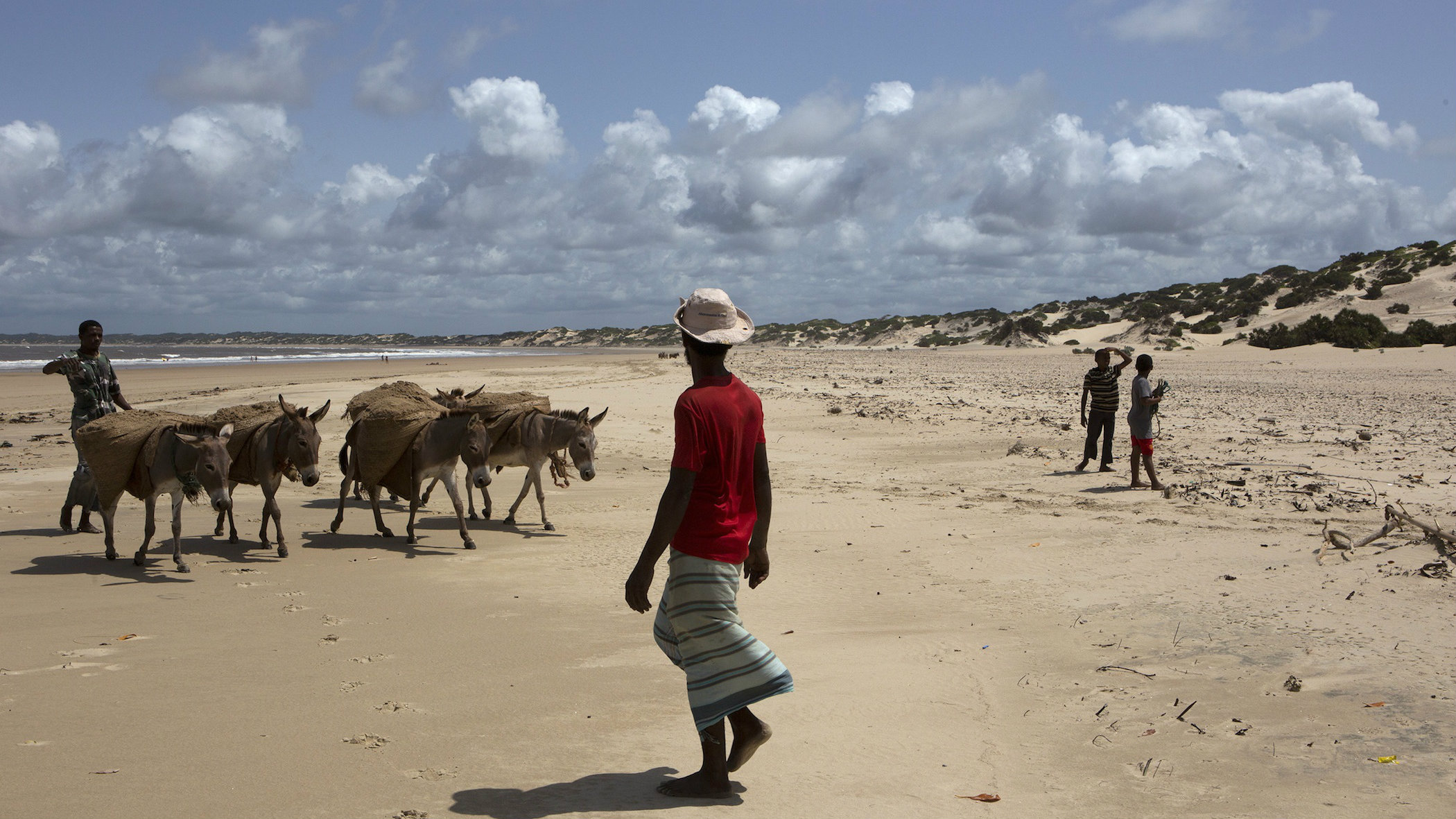 Men lead donkeys carrying sand, to be used to mix building cement, on the beach of Shela in Lamu