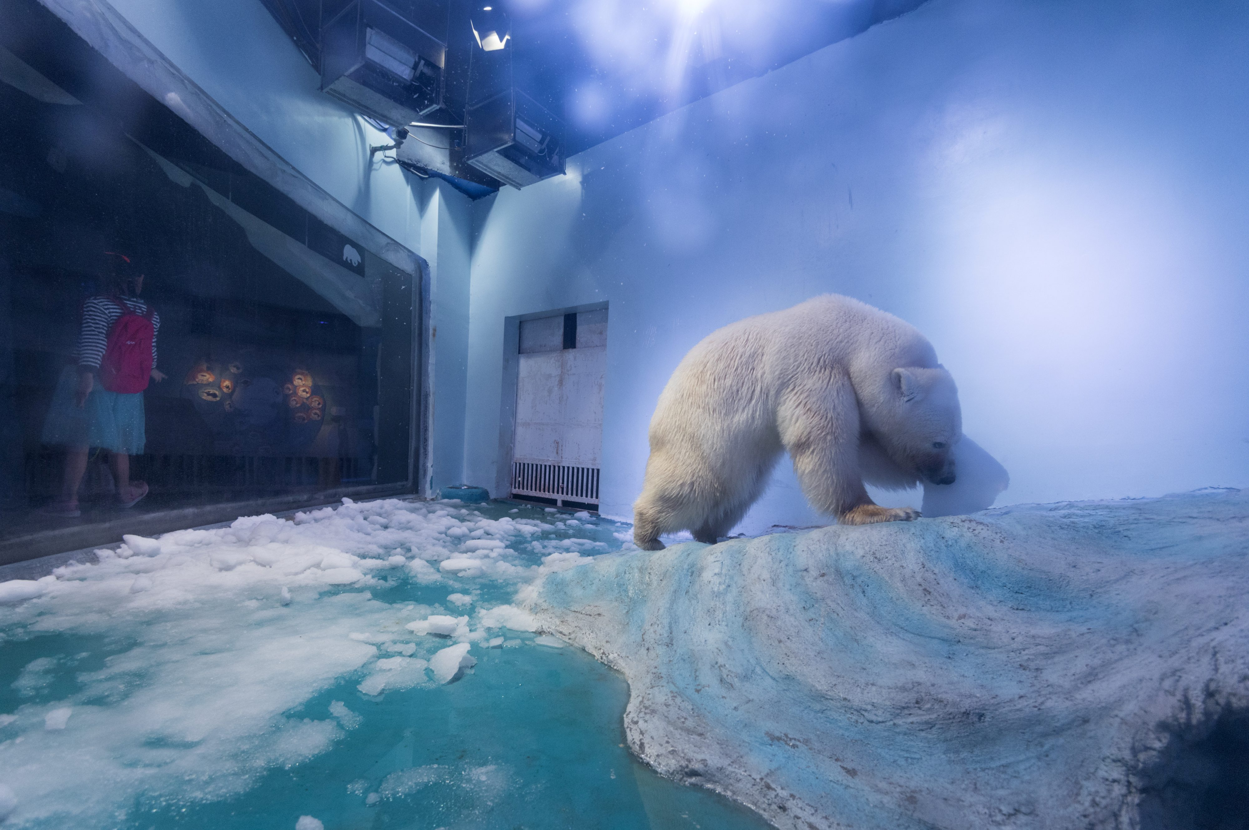 This Is What Democracy Looks Like >> Pizza, the world's saddest polar bear, is just one of thousands of Arctic animals living in ...