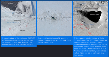 Tomnod seal counting campaign