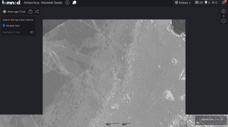 Tomnod seal counting project