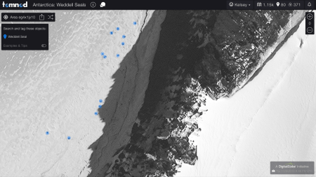 Tomnod seal project