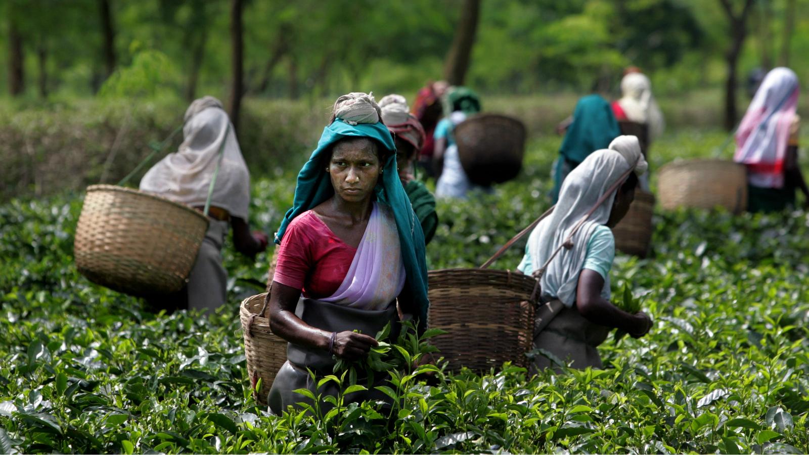 Tea-India-Assam-Maternal-Death