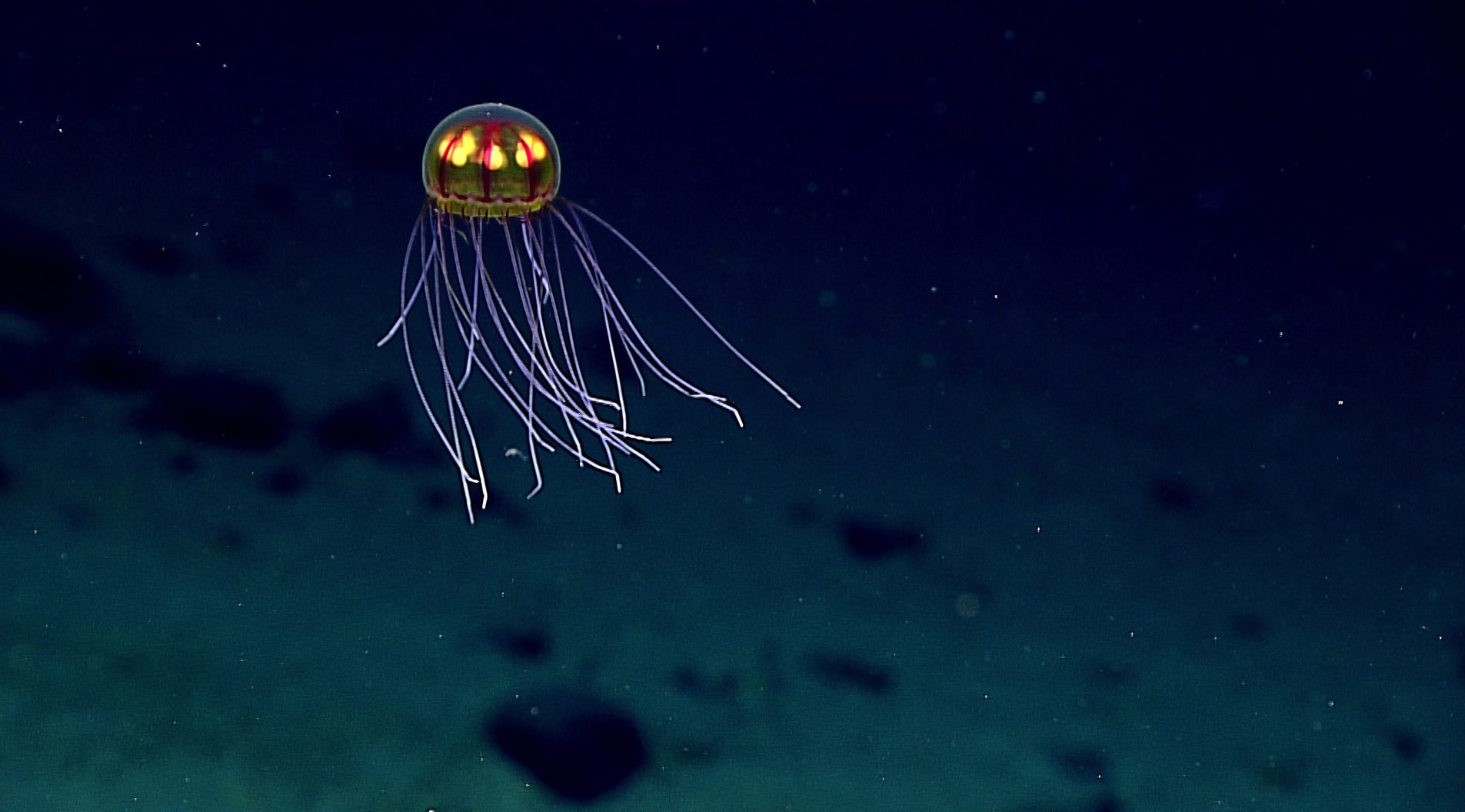 Deep-water jellyfish country.