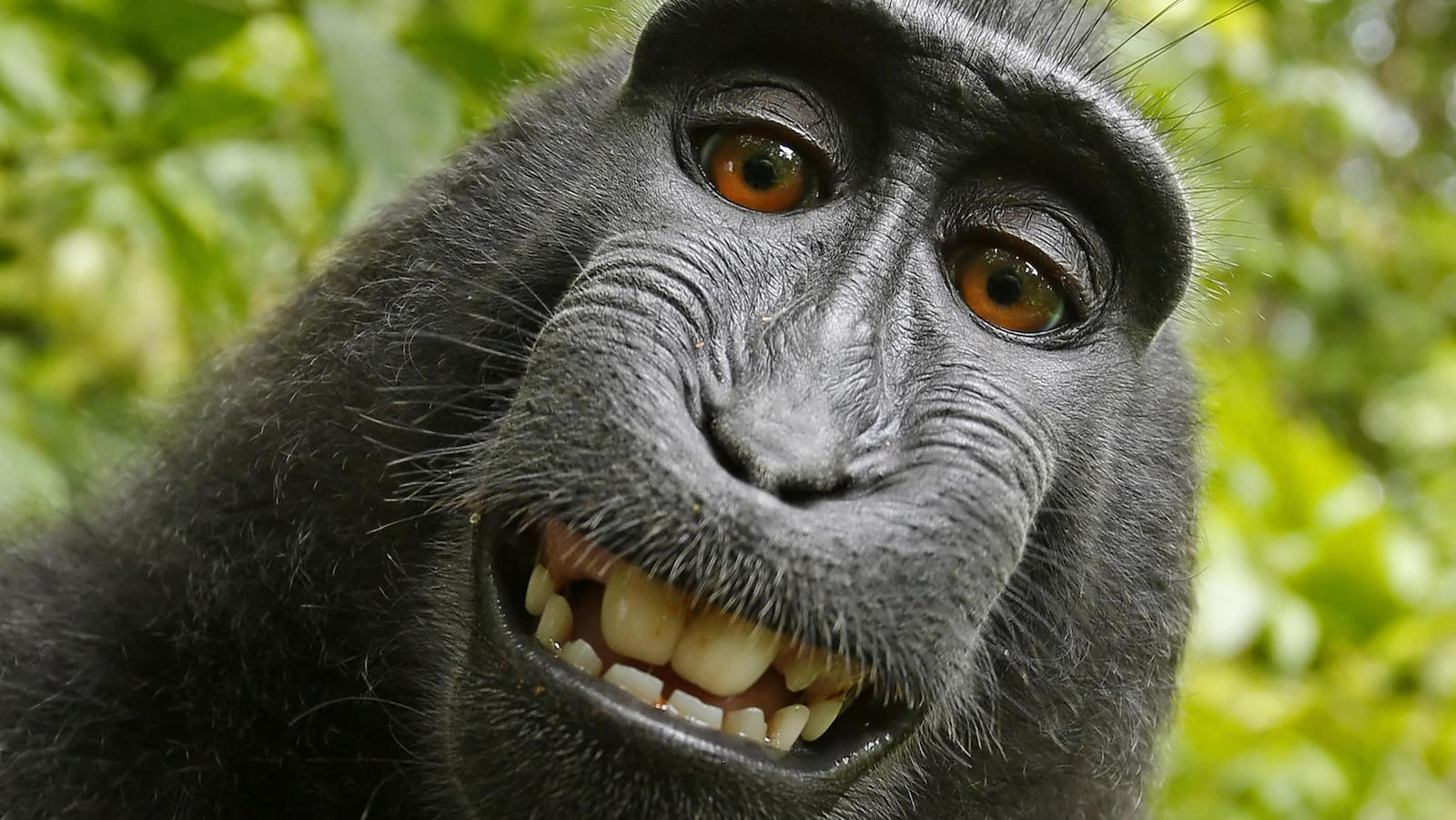 If a monkey takes a selfie in the forest, and no one is around to see it, does he make money?