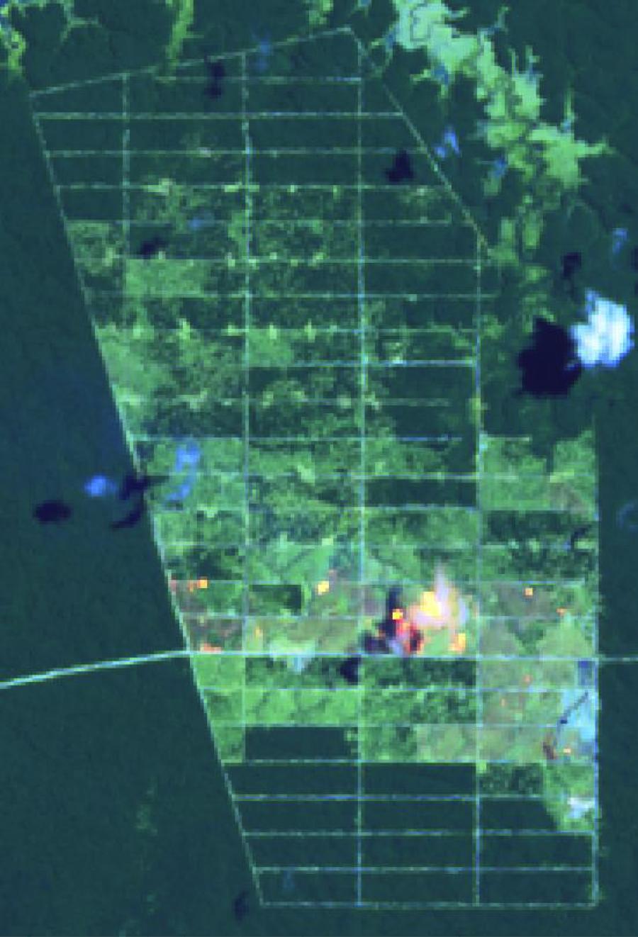 Fires in Korindo's Agro Lestari concession on Papua, Sept 6-14 2015.