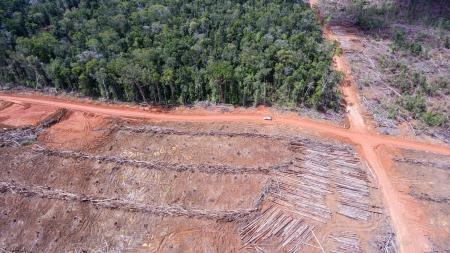 Trees and cleared area in Papua