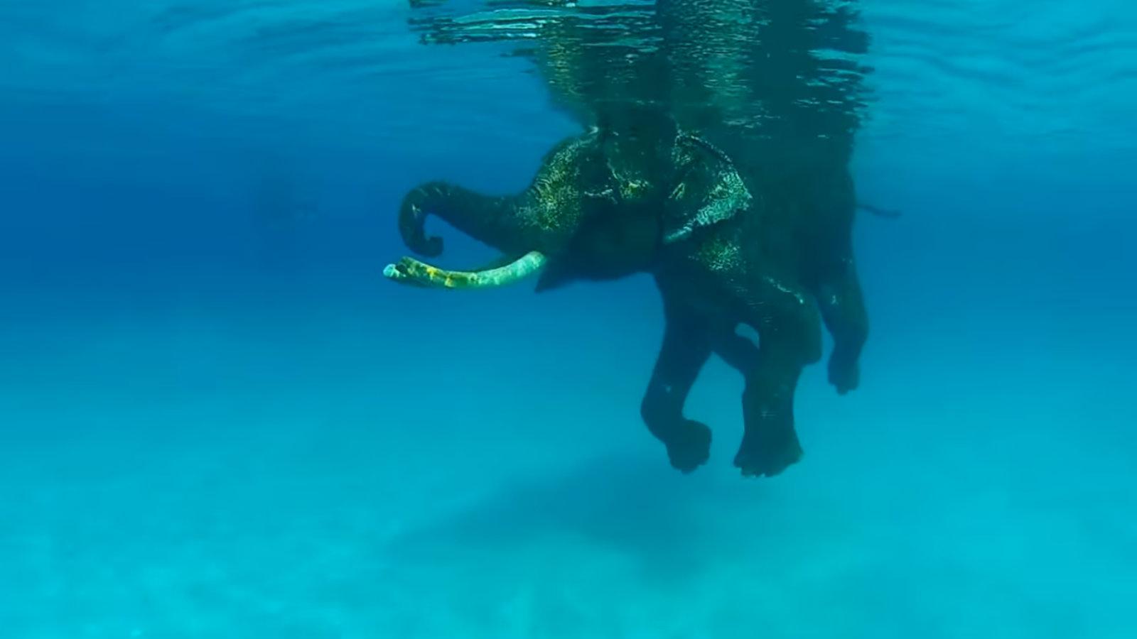 Rajan in his stride under the sea.