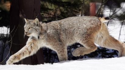 Species-can-wait-average-12-years-to-be-listed-under--US-Endangered-Species-Act