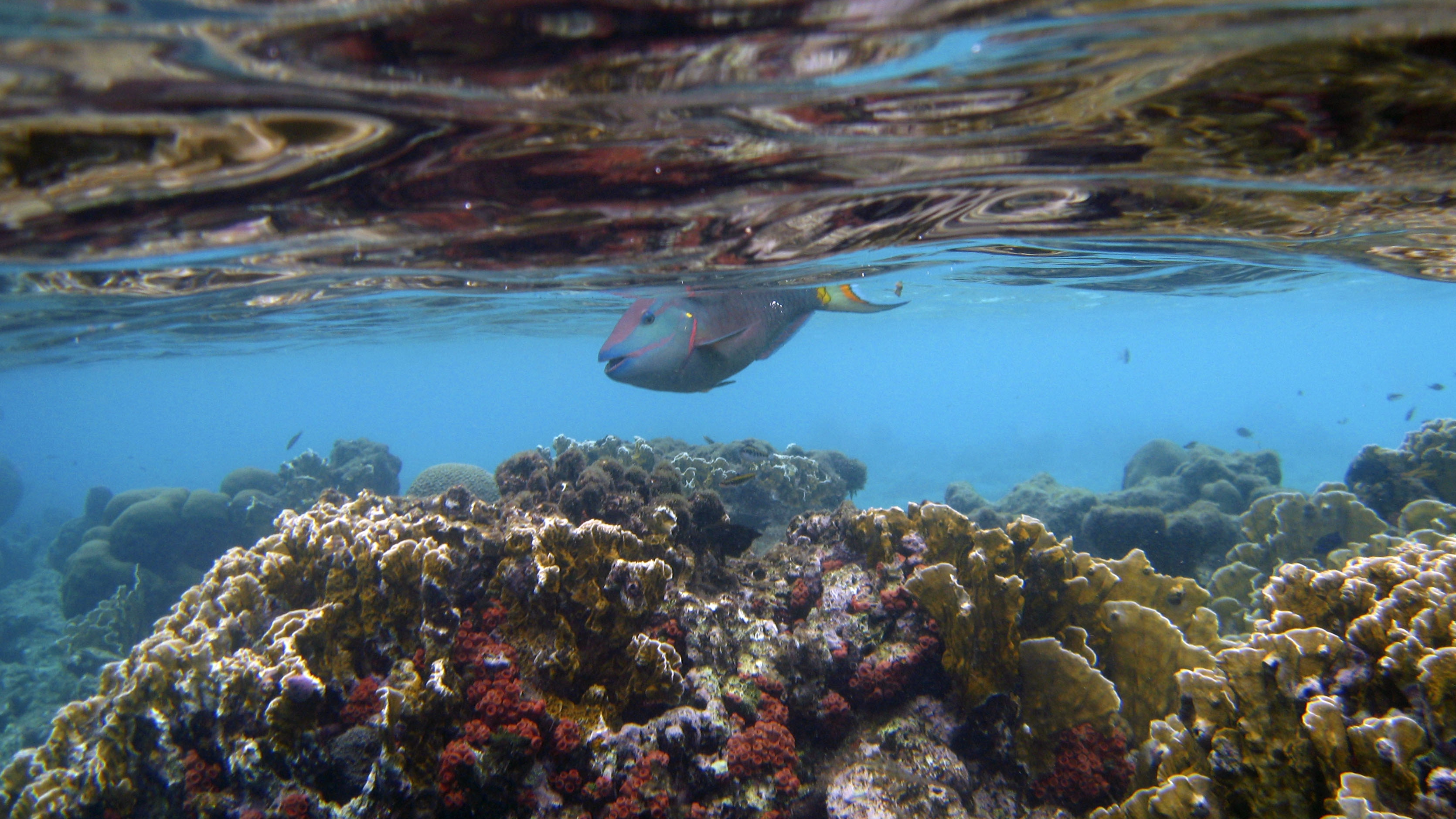 Big-fish-pee-and-coral-reefs