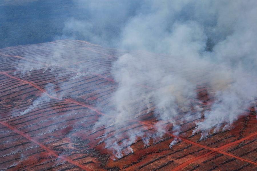 Smoke rising from burning wood rows in Korindo's PT Berkat Cipta Abadi concession, March 2013.