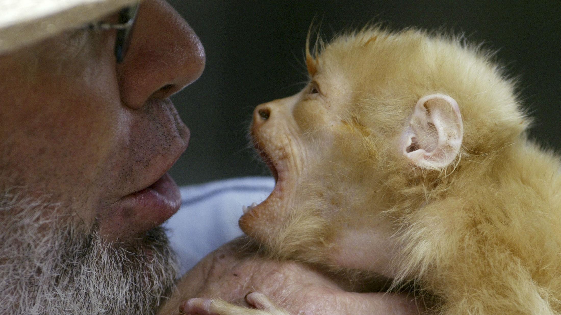 Monkeys in captivity are losing their gut bacteria — Quartz