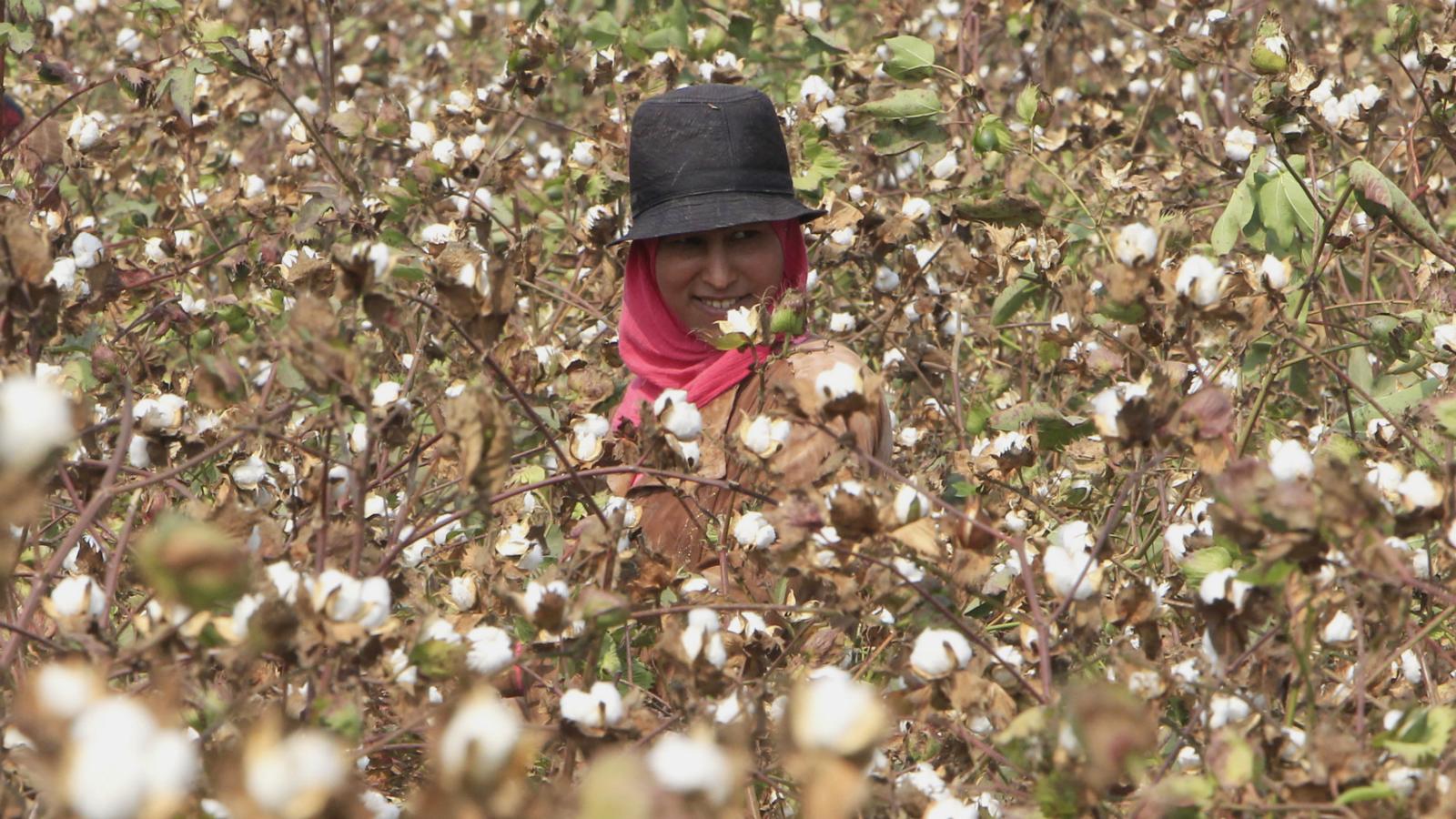 india-egypt-cotton