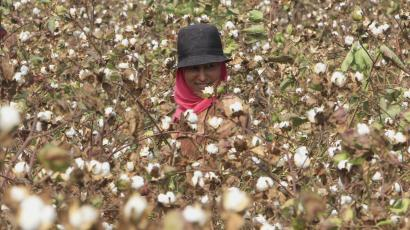 india-egypt-cotton