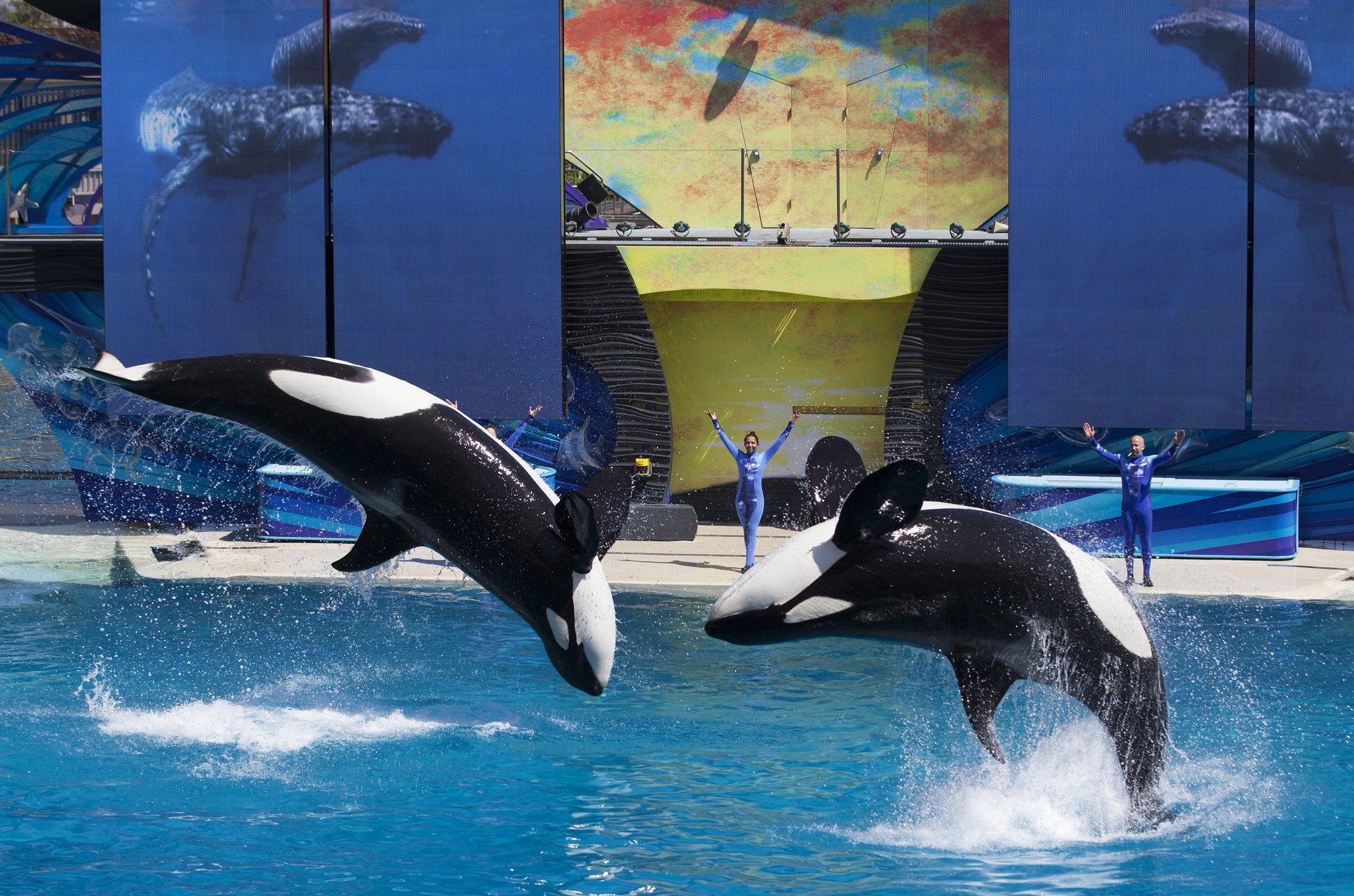SeaWorld orcas killer whales