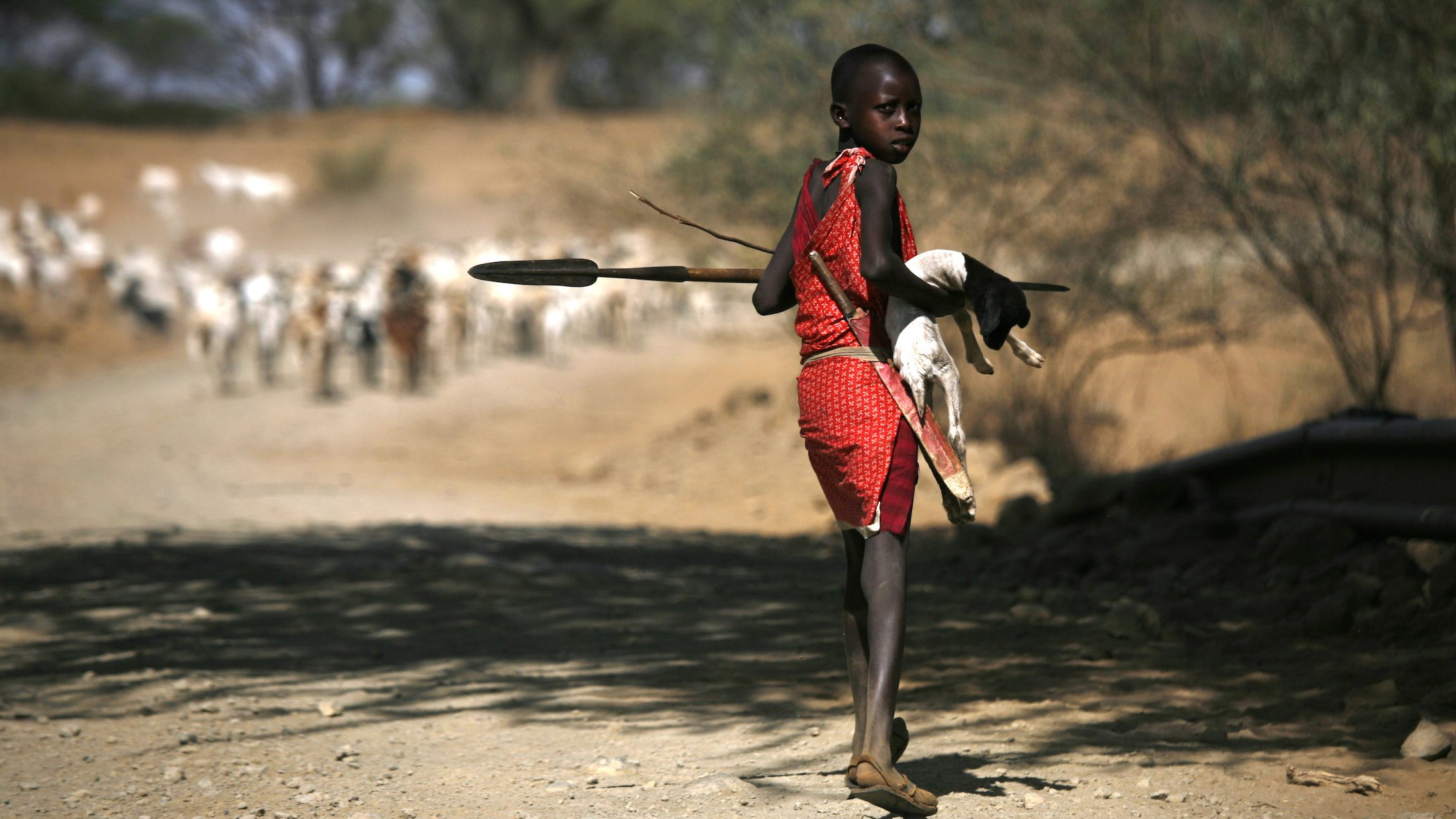 A young Maasai herder carries a kid that is too weak to walk on the road to Pakase village