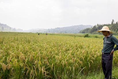 A Chinese aid project for Rwandan farmers is more about