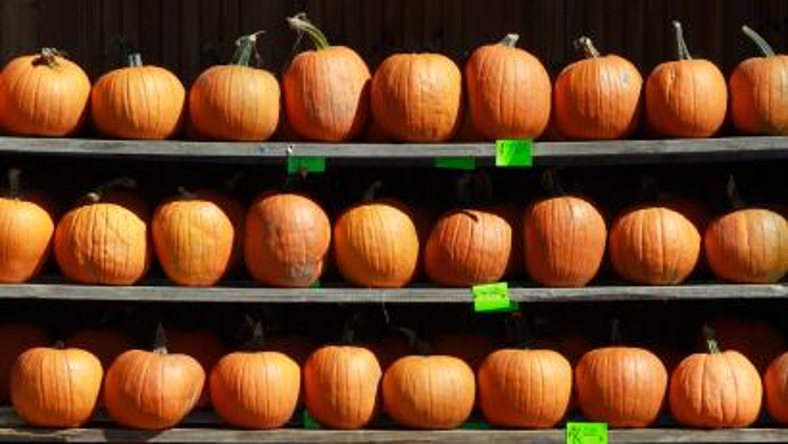 Starbucks Psl Season Get Over It America Pumpkin Spice