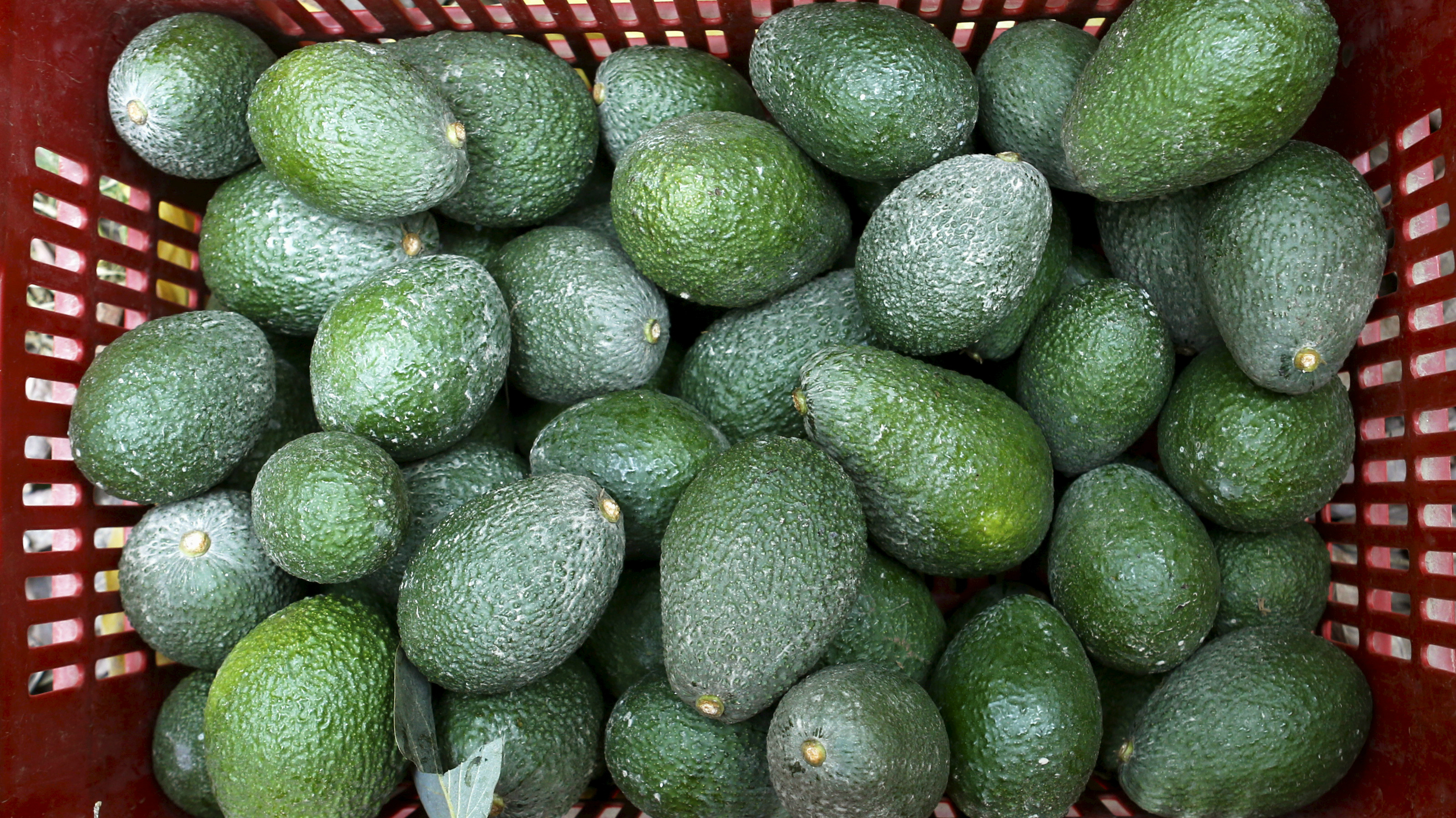 Avocado prices are rising with their popularity.