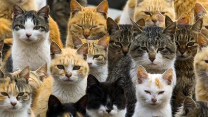 An army of cats on an island in Japan