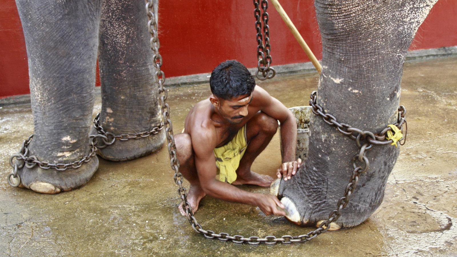 India-Elephants-Captivity